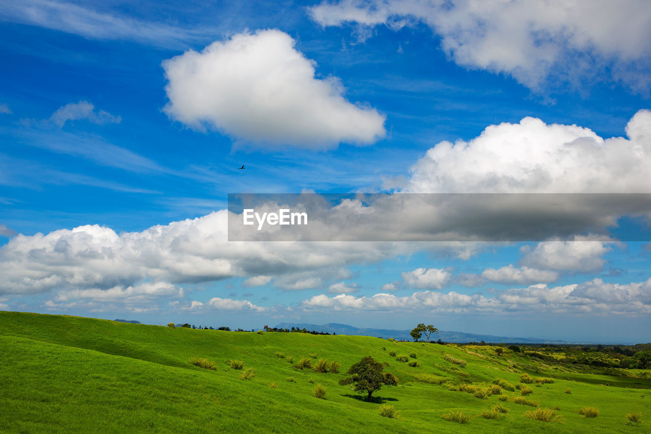 cloud - sky, sky, environment, landscape, beauty in nature, scenics - nature, tranquil scene, green color, tranquility, grass, plant, land, field, nature, non-urban scene, day, no people, animal, animal themes, idyllic, outdoors, rolling landscape