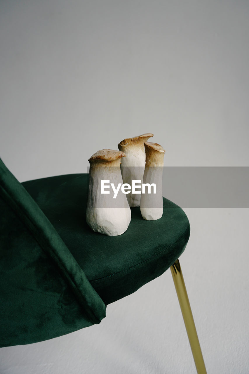 no people, copy space, indoors, wood - material, close-up, animal, animal themes, nature, studio shot, food, vertebrate, vegetable, still life, bird, white background, high angle view, mushroom, table, freshness, animal wildlife