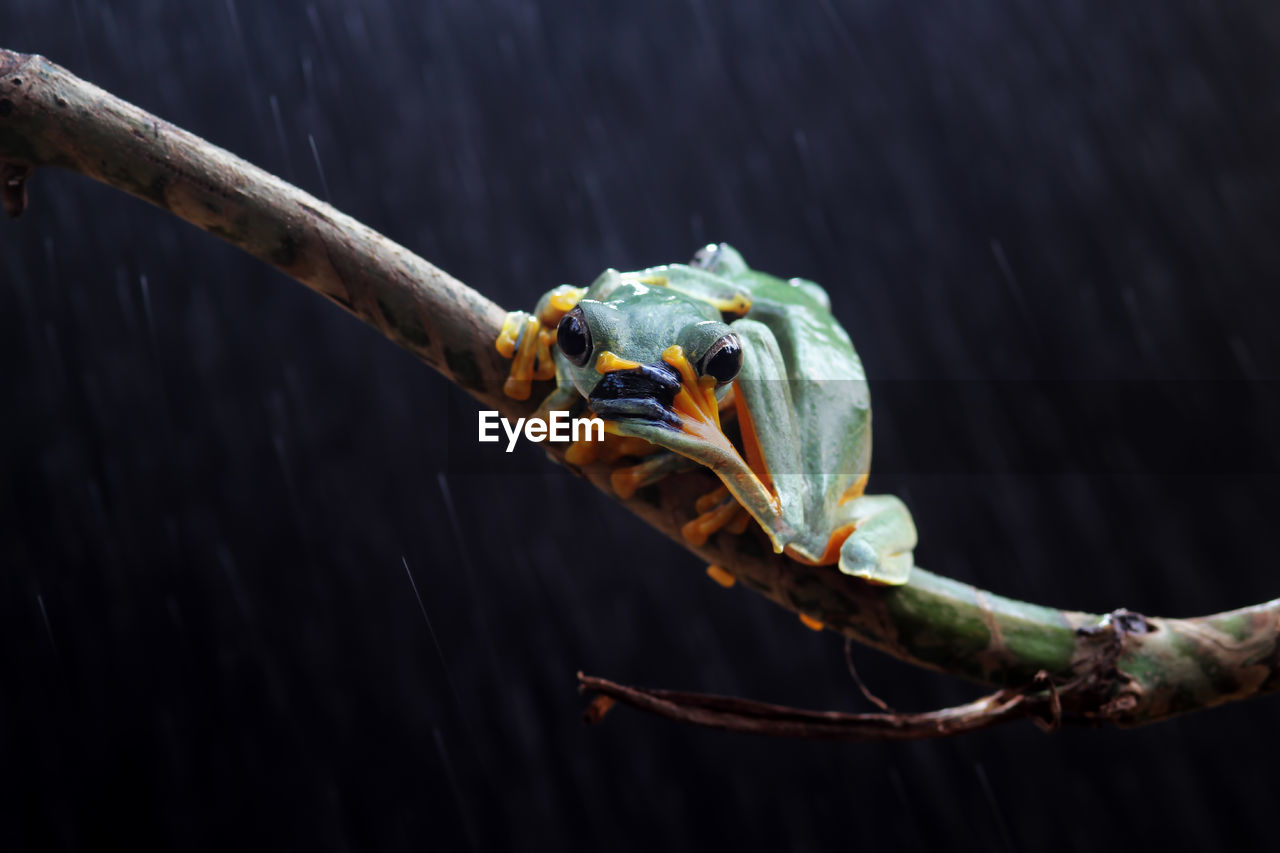 animal wildlife, animal themes, animal, one animal, animals in the wild, close-up, focus on foreground, no people, vertebrate, nature, day, outdoors, plant, invertebrate, animal body part, branch, insect, tree, zoology, reptile, animal head, animal eye