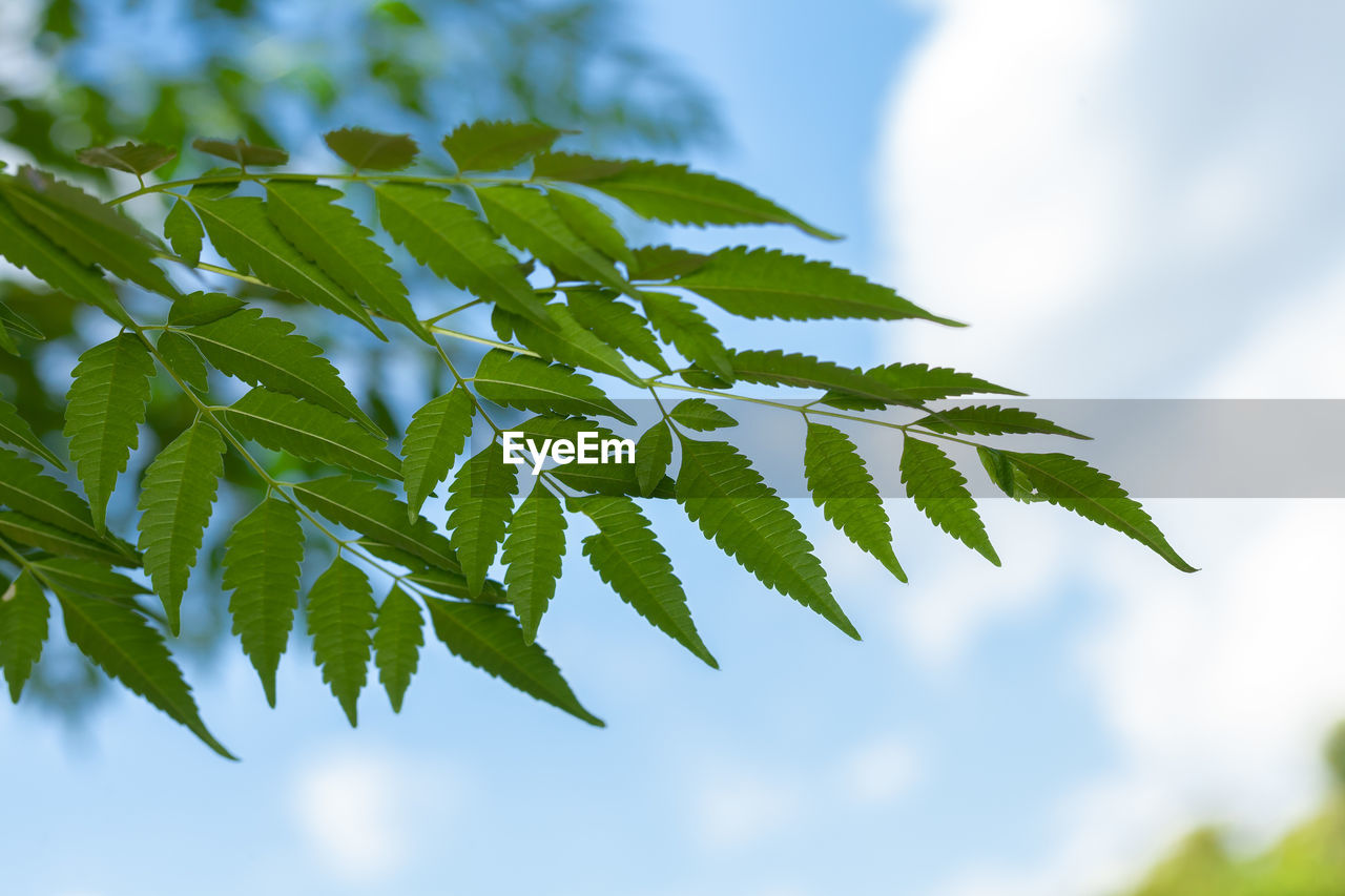 CLOSE-UP OF LEAVES ON PLANT AGAINST SKY