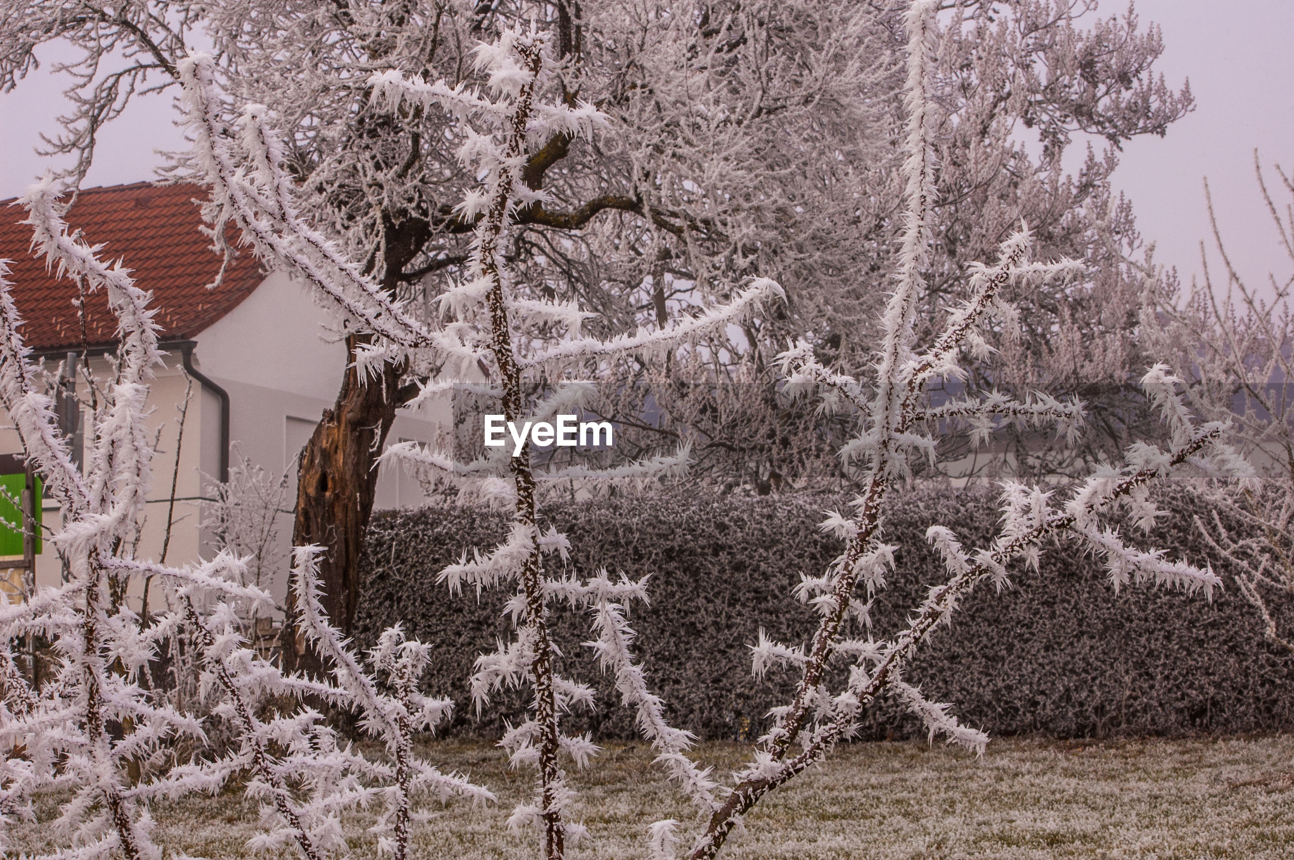 FROZEN TREES ON SNOW COVERED LANDSCAPE