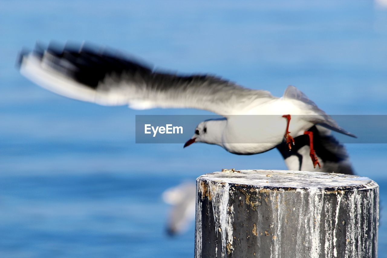 CLOSE-UP OF SEAGULL PERCHING ON WATER AGAINST SEA