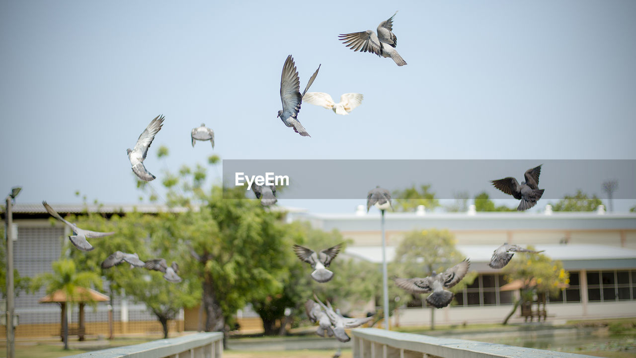 animal, flying, animal wildlife, animal themes, animals in the wild, bird, group of animals, vertebrate, mid-air, spread wings, sky, nature, no people, large group of animals, day, focus on foreground, motion, flock of birds, plant, seagull