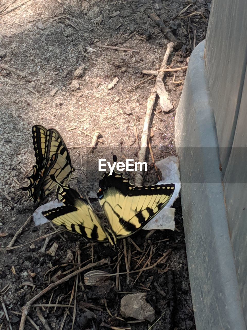 insect, animal themes, invertebrate, animal wildlife, animals in the wild, animal, one animal, day, butterfly - insect, animal wing, nature, close-up, no people, beauty in nature, yellow, outdoors, plant, flower, butterfly, high angle view