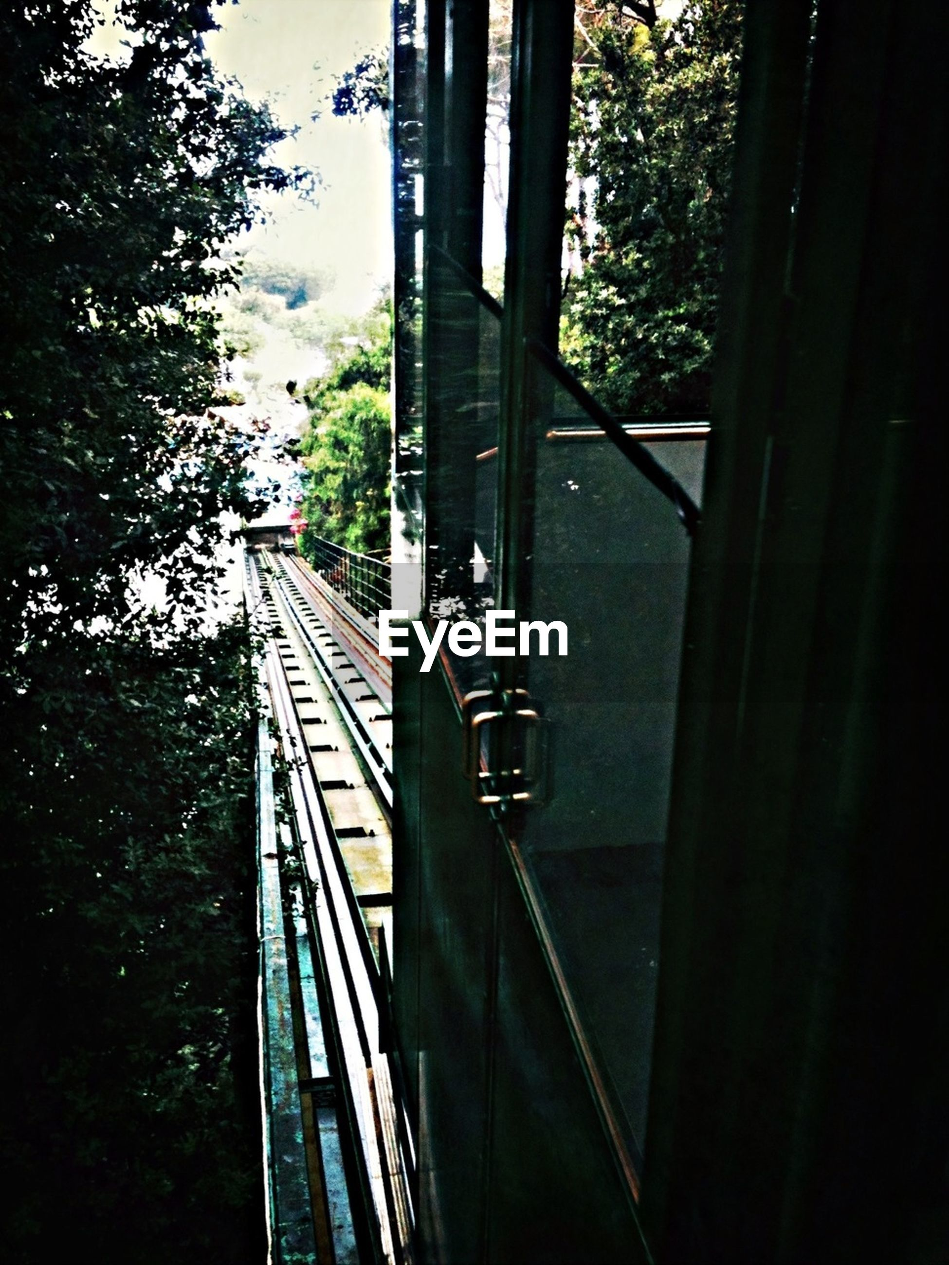 transportation, tree, built structure, sky, metal, mode of transport, railing, sunlight, architecture, day, bridge - man made structure, connection, travel, railroad track, land vehicle, no people, glass - material, outdoors, metallic, the way forward
