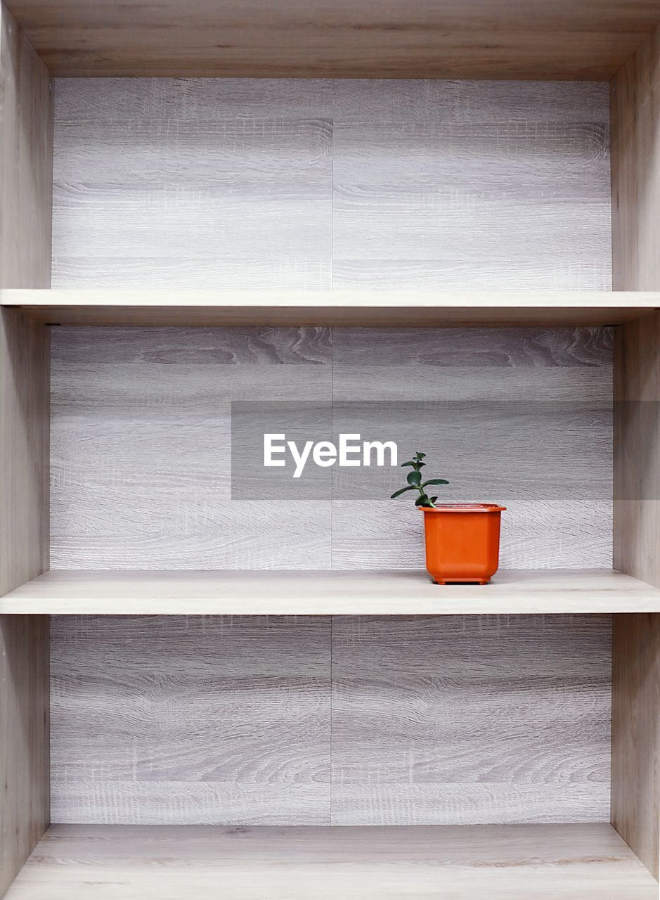 Potted plant in shelf at home
