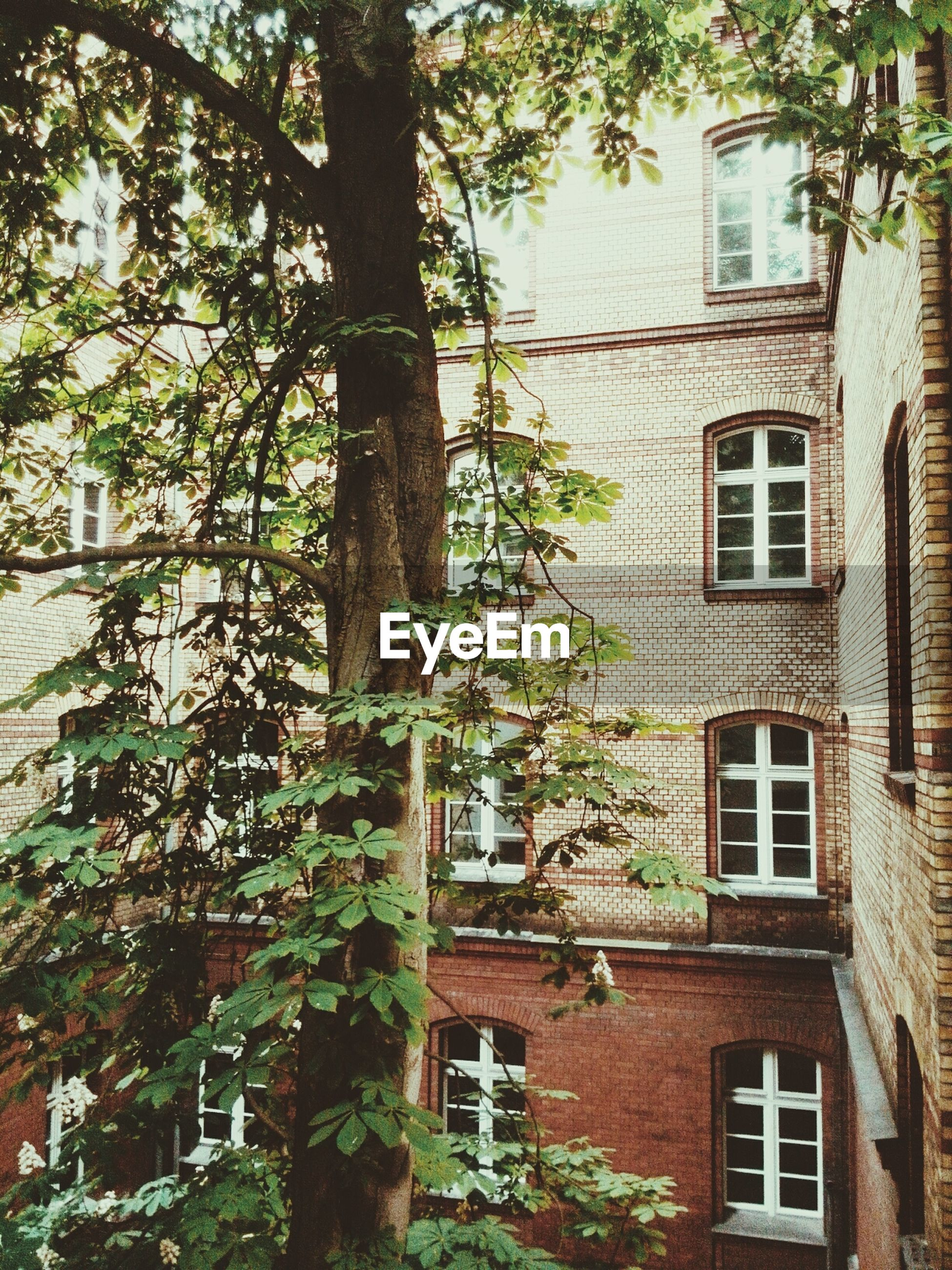 Tree in front of building with windows and brick wall