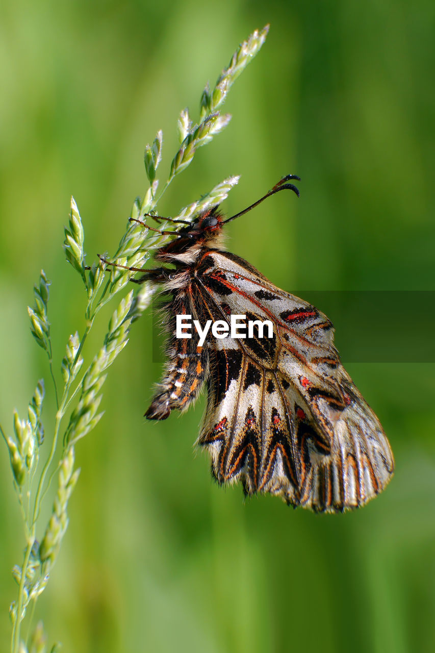animal, animal themes, invertebrate, animal wildlife, insect, animals in the wild, plant, focus on foreground, beauty in nature, one animal, no people, close-up, nature, animal wing, day, green color, flower, growth, outdoors, vulnerability, butterfly - insect, butterfly