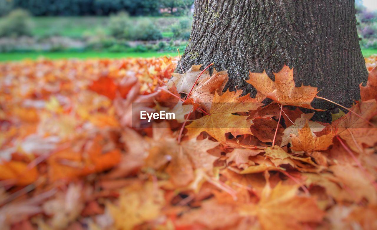 Fallen leaves surrounding tree in park