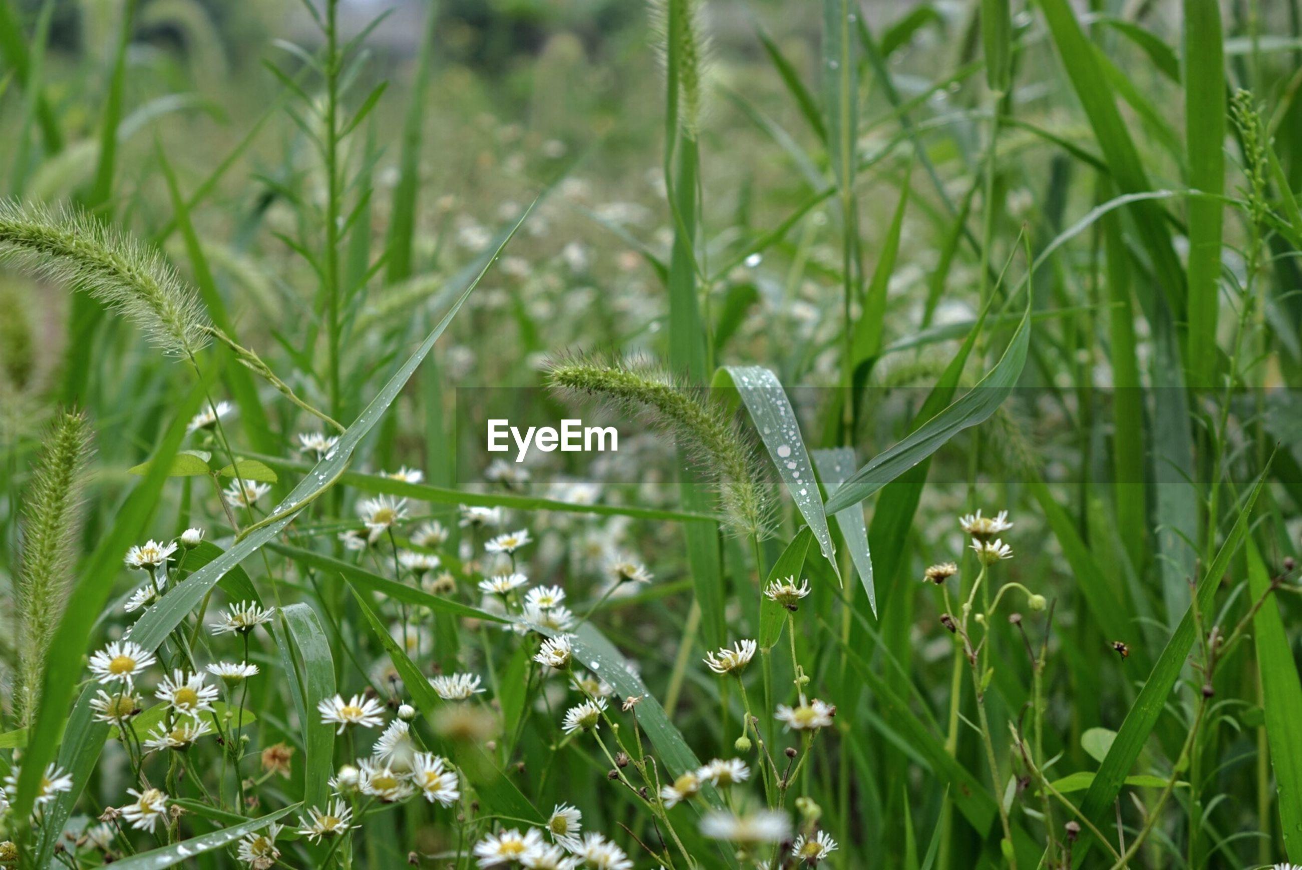 Plants in meadow