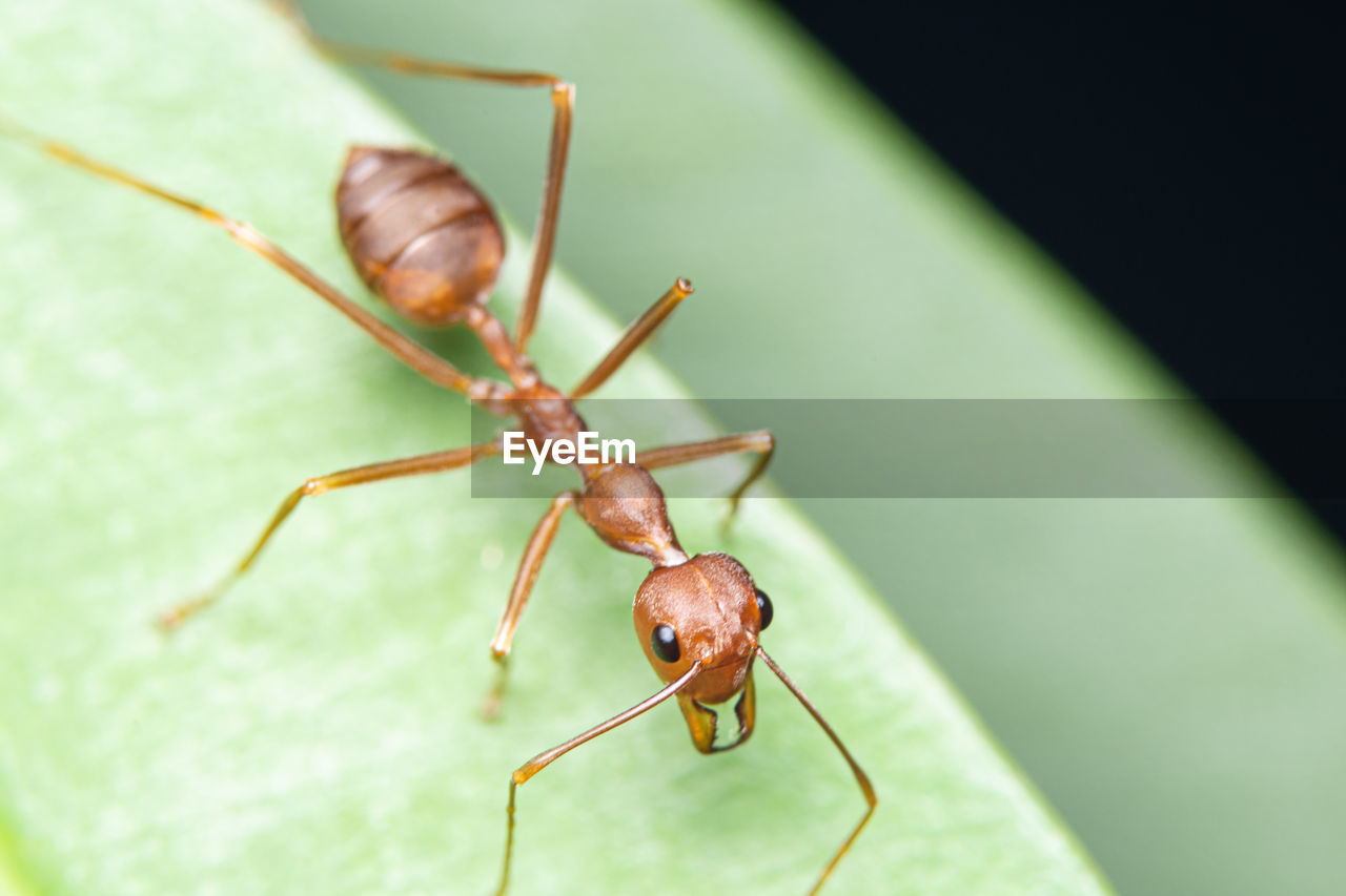 invertebrate, animal, animal themes, insect, animal wildlife, one animal, animals in the wild, green color, close-up, no people, leaf, animal body part, selective focus, plant part, nature, day, zoology, animal antenna, focus on foreground, outdoors