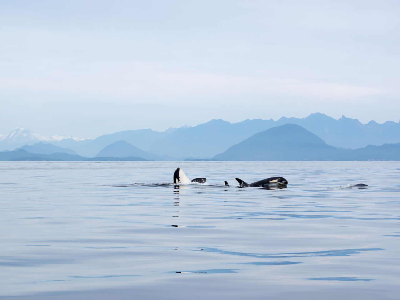 Scenic view of sea against sky and orcas