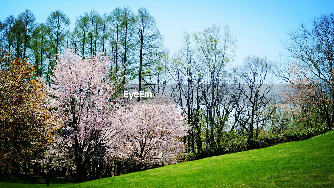 tree, beauty in nature, nature, flower, blossom, tranquility, growth, branch, no people, outdoors, tranquil scene, springtime, scenics, park - man made space, autumn, grass, day, landscape, sky, fragility, freshness