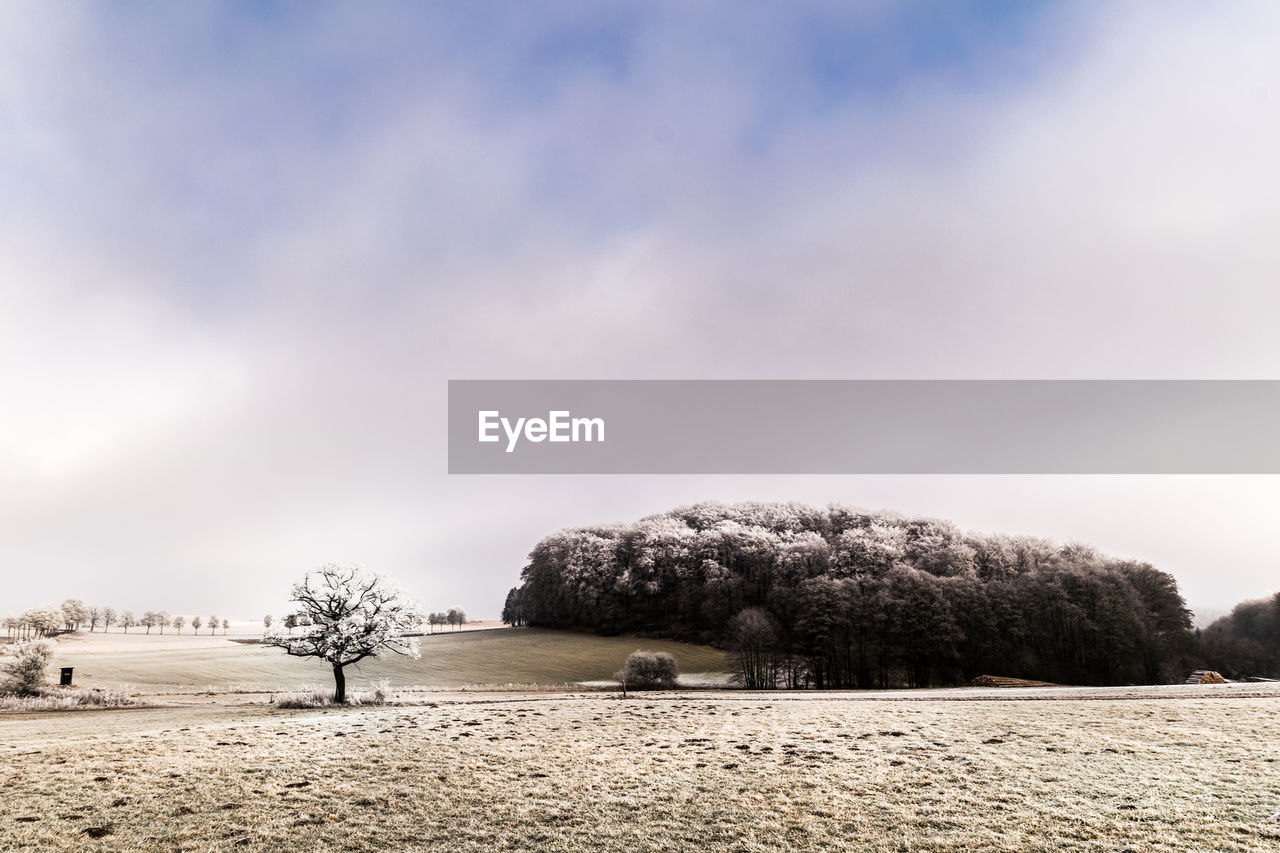 tree, nature, beauty in nature, tranquility, tranquil scene, sky, outdoors, scenics, field, snow, winter, day, landscape, no people, cold temperature
