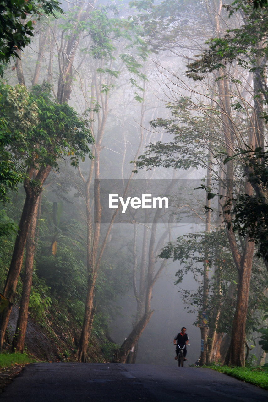 tree, real people, nature, leisure activity, outdoors, rear view, one person, day, full length, beauty in nature, mountain, tranquility, tranquil scene, road, scenics, lifestyles, men, landscape, fog, adventure, forest, people