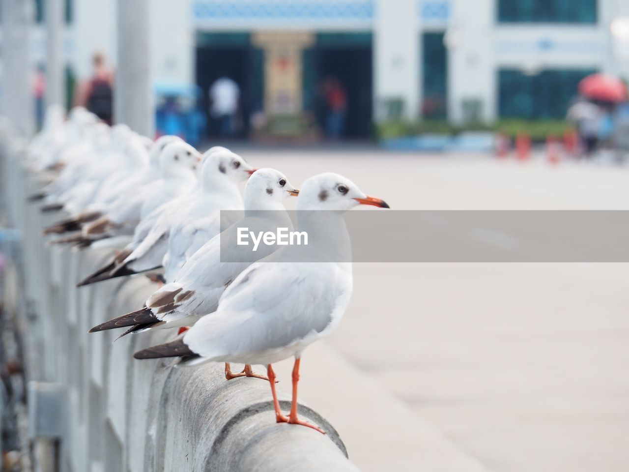 bird, animal, animal themes, animals in the wild, vertebrate, animal wildlife, focus on foreground, group of animals, perching, seagull, day, incidental people, close-up, architecture, city, outdoors, railing, white color, footpath