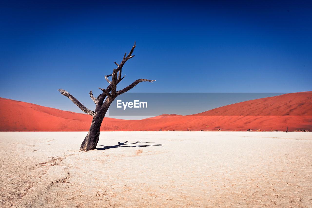 Bare tree against clear blue sky at namib desert