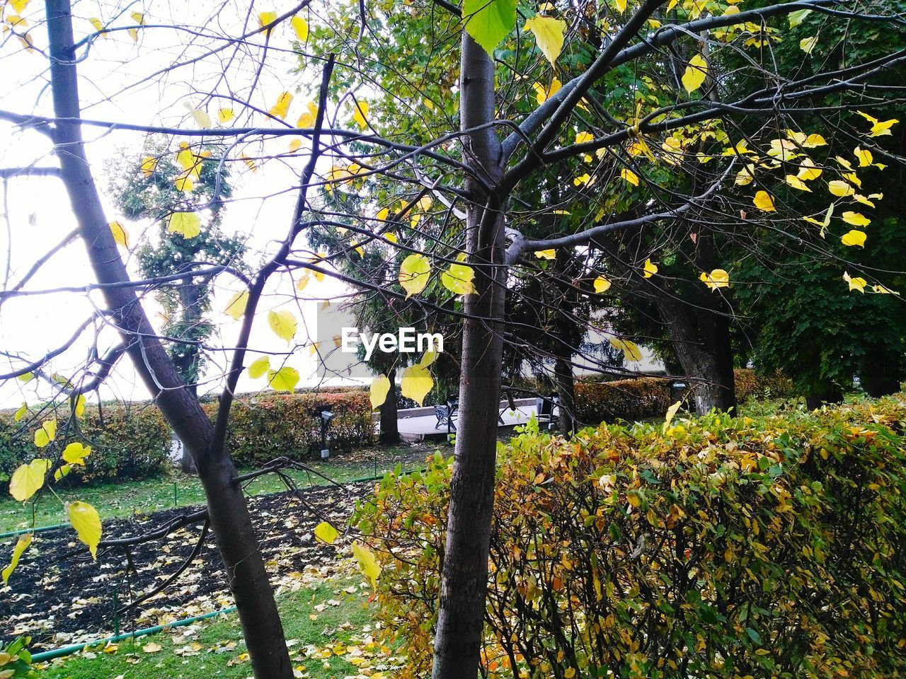 tree, growth, branch, beauty in nature, nature, day, outdoors, no people, tranquility, yellow, low angle view, leaf, scenics, tree trunk, flower, freshness