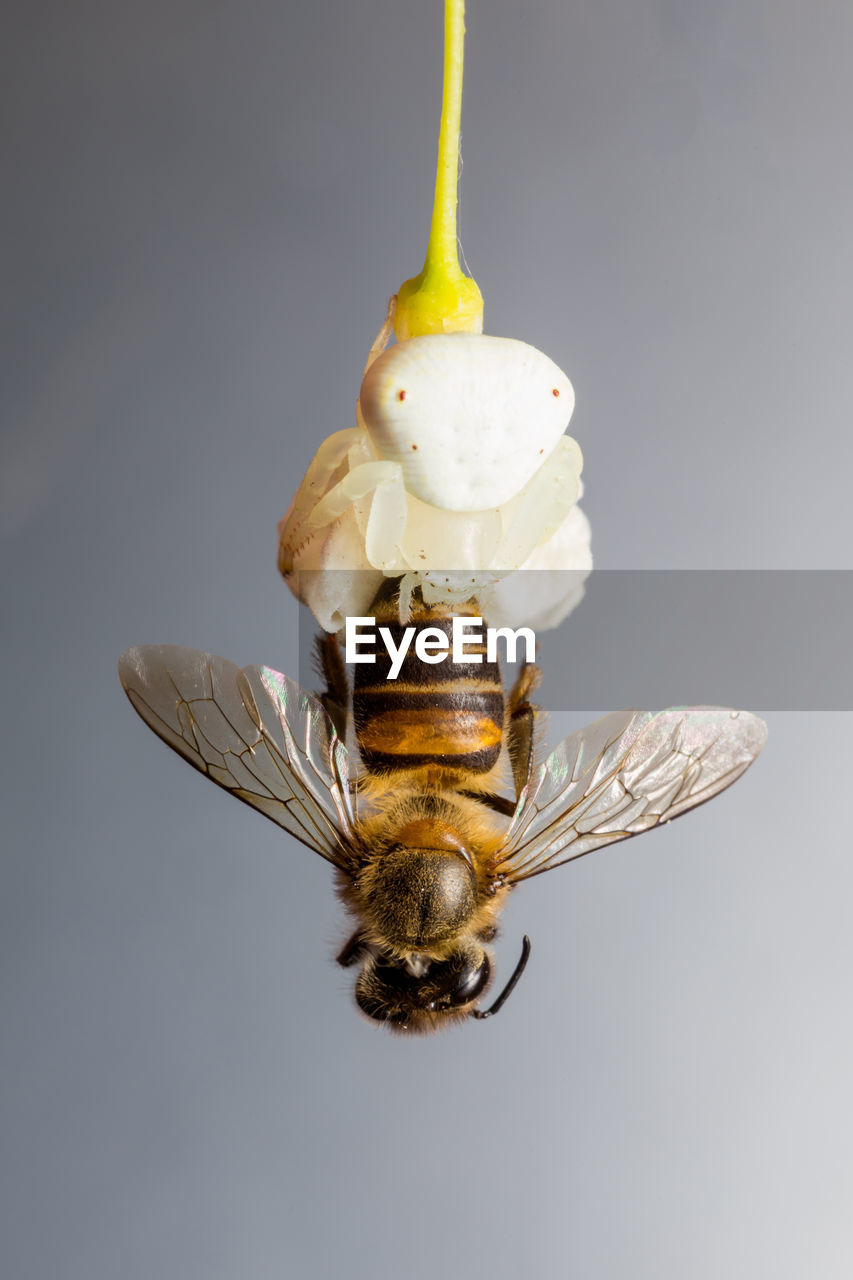 animal, invertebrate, animal themes, animal wildlife, insect, one animal, close-up, animals in the wild, studio shot, no people, animal wing, indoors, animal body part, focus on foreground, animal antenna, cut out, yellow, zoology, beauty in nature, nature, animal eye