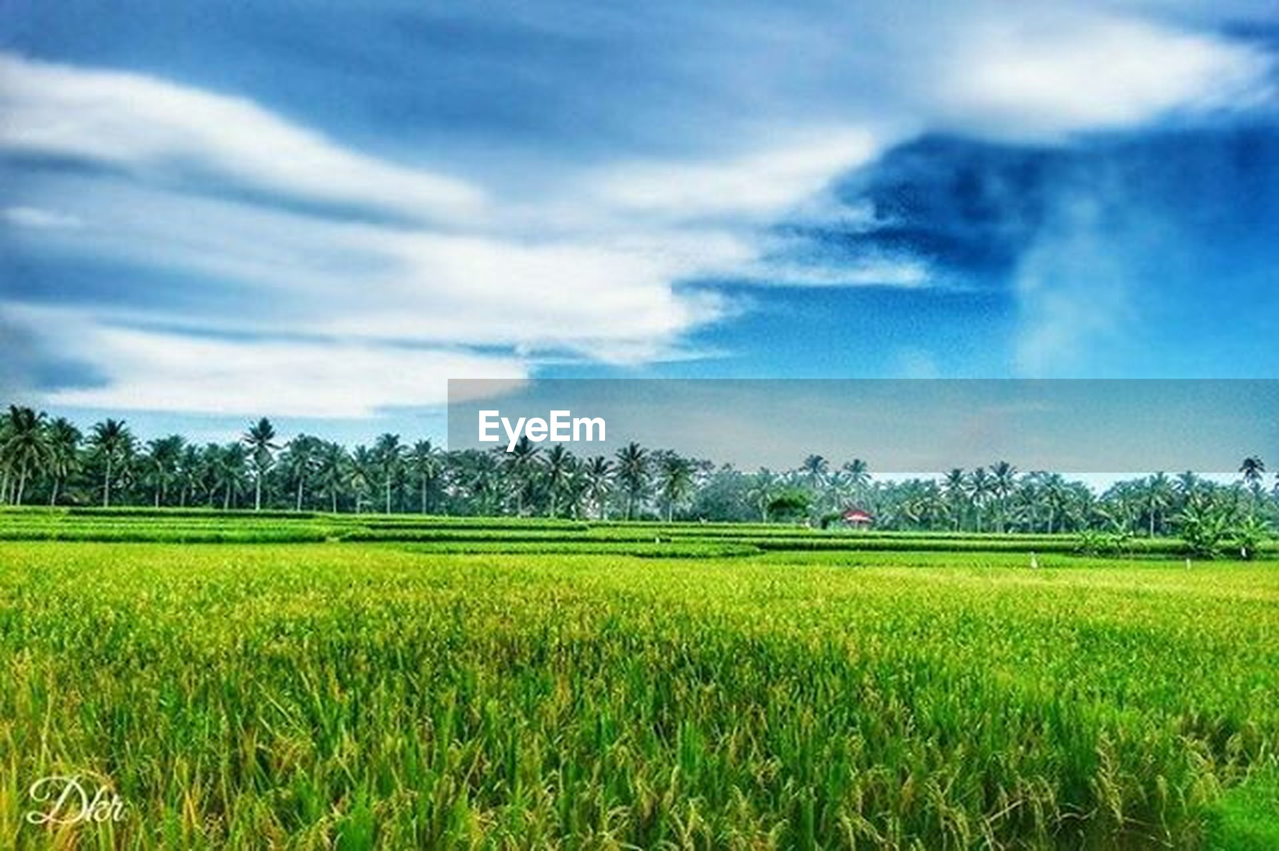 agriculture, field, rural scene, landscape, sky, tranquil scene, growth, farm, crop, tranquility, beauty in nature, scenics, nature, cloud - sky, cultivated land, tree, green color, cloud, cloudy, grass