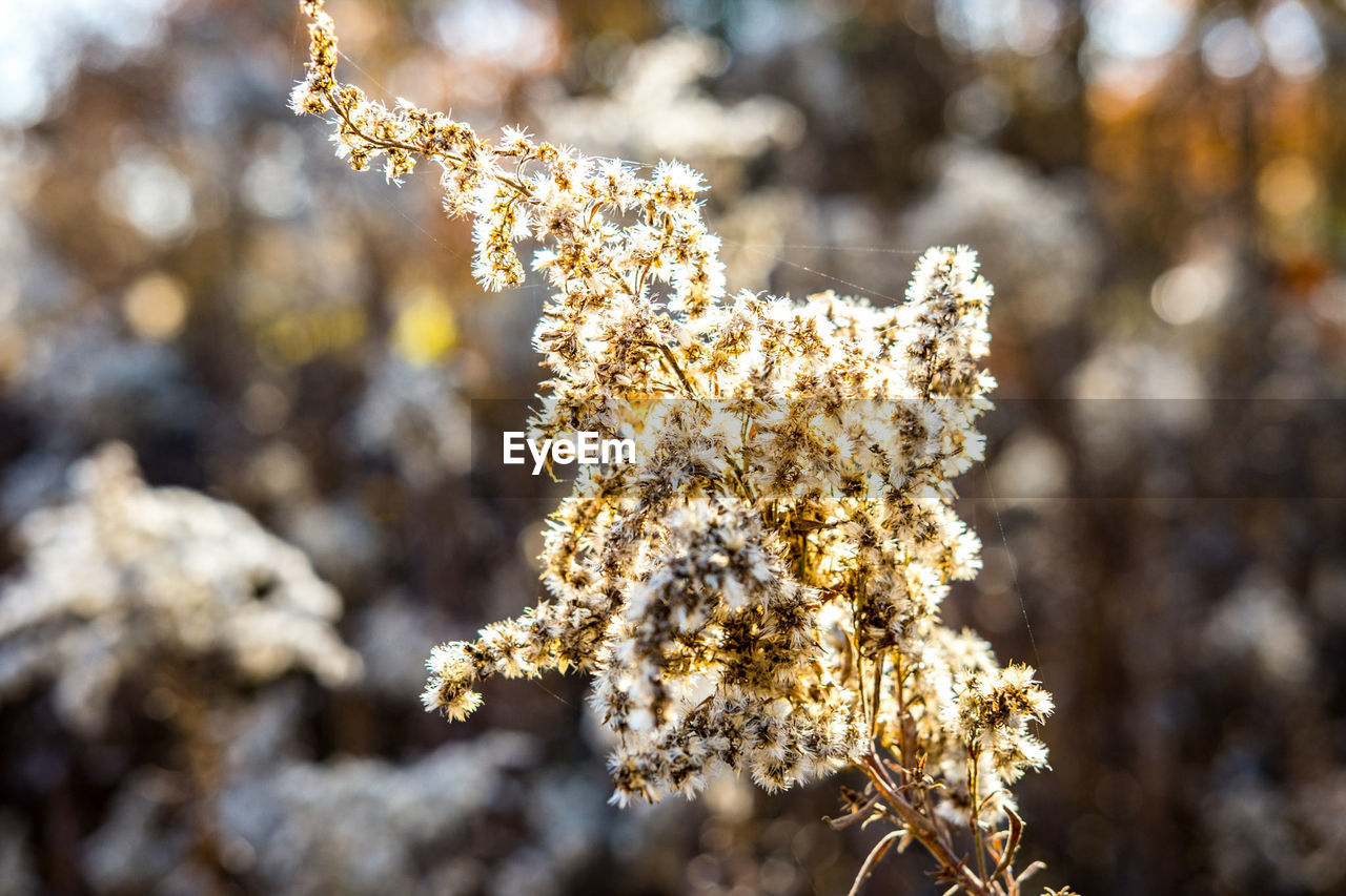 cold temperature, winter, nature, focus on foreground, fragility, beauty in nature, snow, close-up, frozen, day, outdoors, no people, ice, growth, flower, tree, branch, freshness, catkin