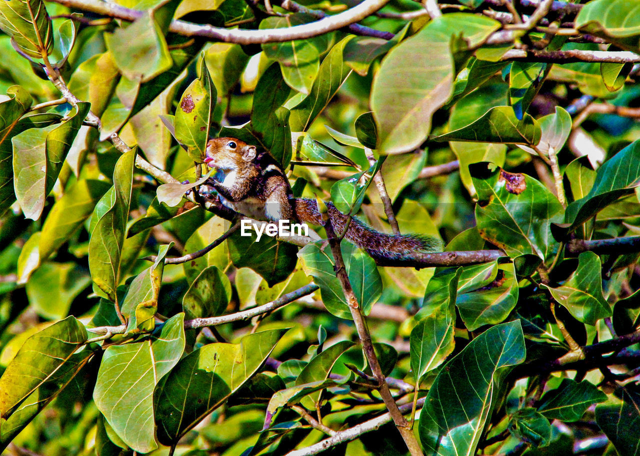 animal, animal themes, animal wildlife, plant, plant part, leaf, animals in the wild, one animal, tree, vertebrate, green color, nature, growth, branch, no people, bird, day, outdoors, perching, beauty in nature