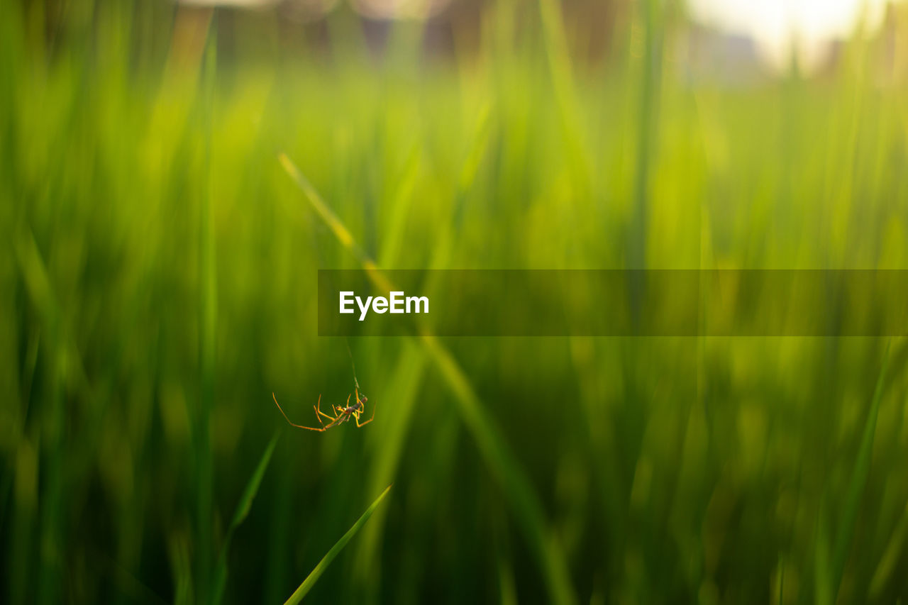 plant, green color, growth, beauty in nature, nature, close-up, day, focus on foreground, no people, grass, one animal, selective focus, field, animals in the wild, animal wildlife, animal, animal themes, land, fragility, vulnerability, outdoors, blade of grass