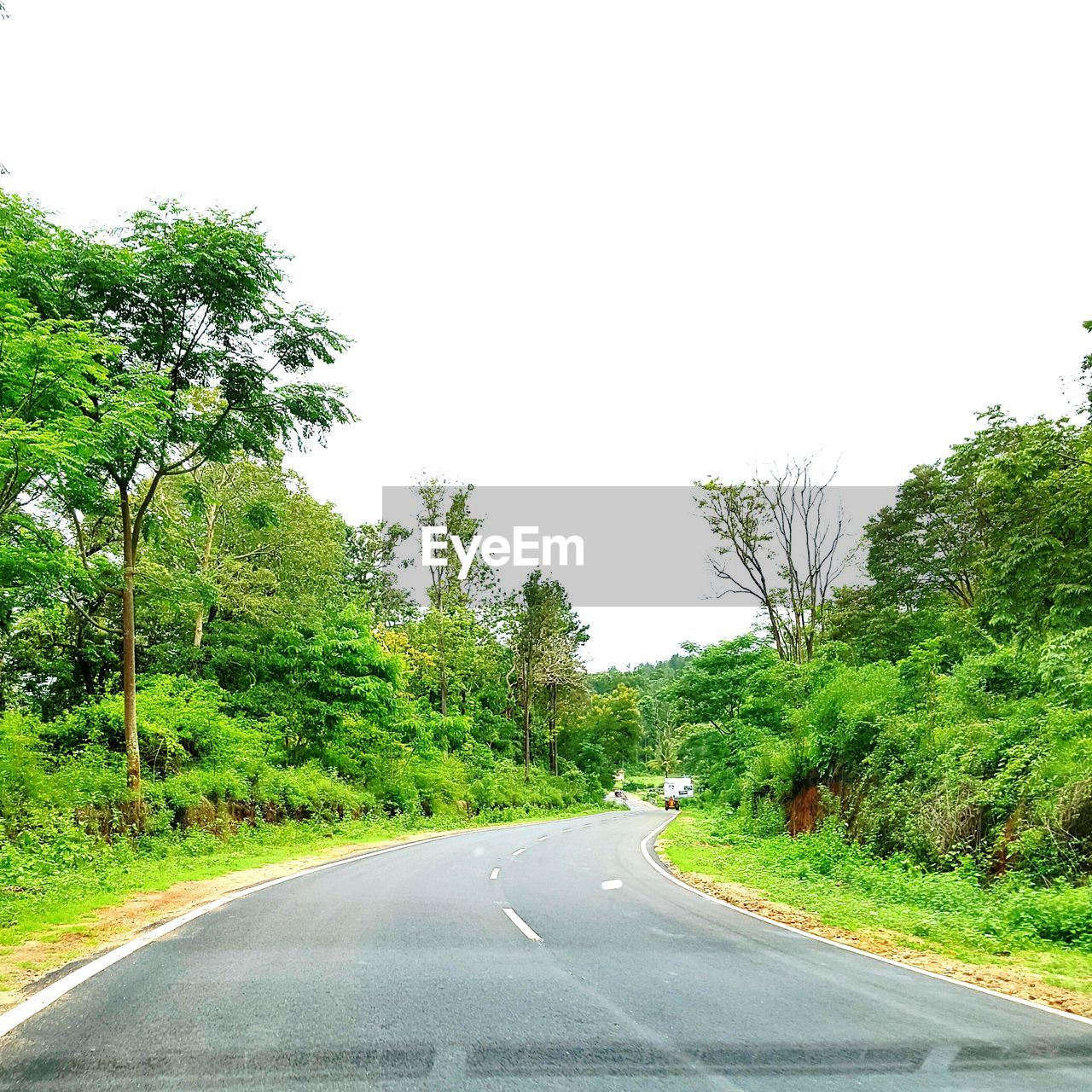 tree, road, the way forward, transportation, green color, growth, day, nature, clear sky, tranquil scene, tranquility, no people, outdoors, scenics, beauty in nature, landscape, sky, winding road, grass