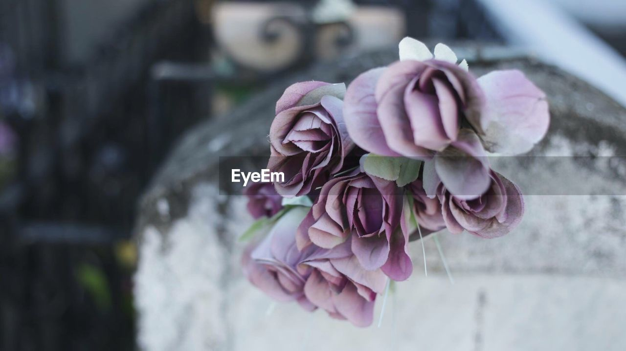 focus on foreground, flower, plant, close-up, freshness, beauty in nature, flowering plant, pink color, fragility, vulnerability, nature, petal, day, rose, inflorescence, rose - flower, flower head, outdoors, no people