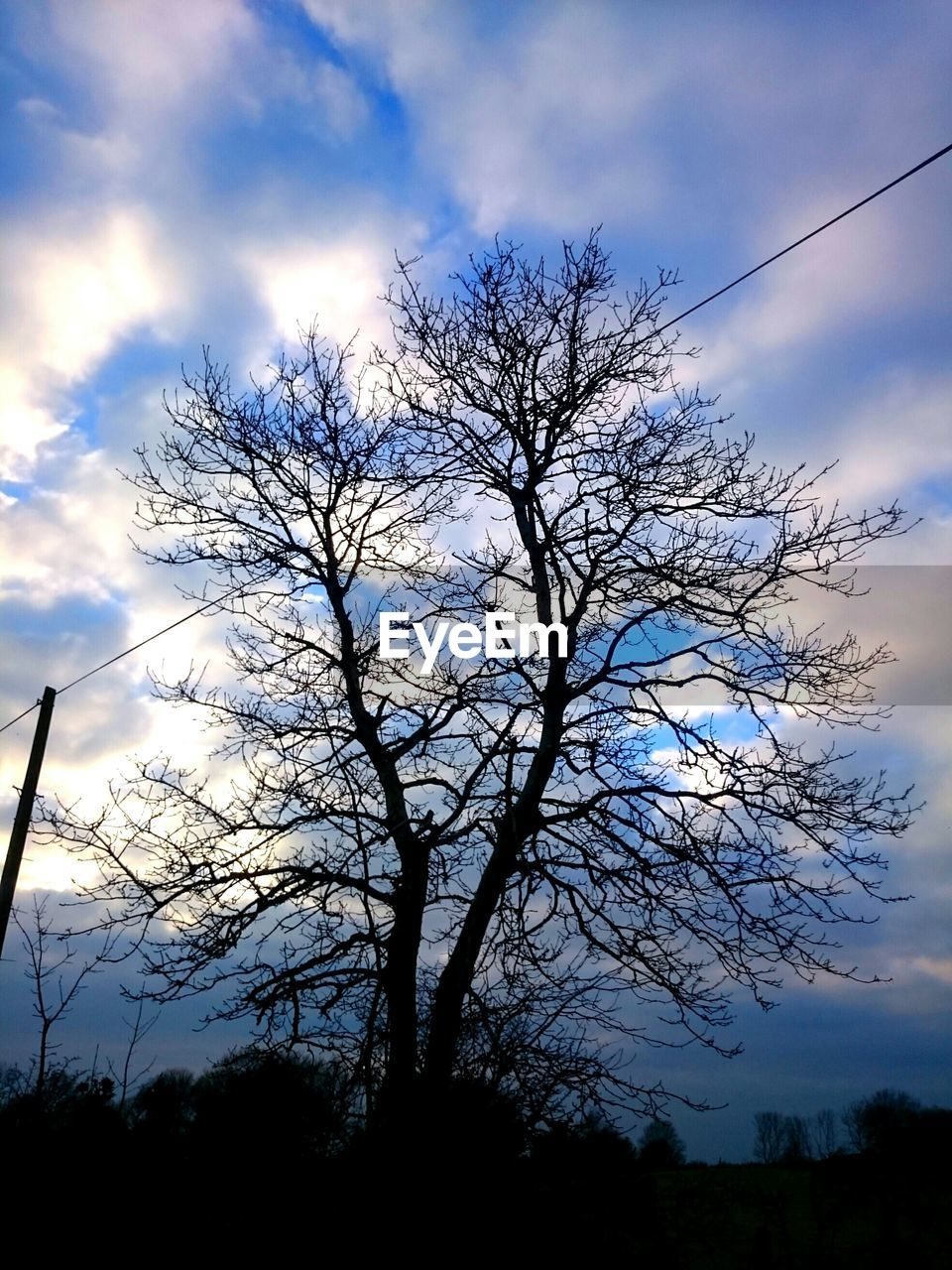 sky, tree, low angle view, cloud - sky, beauty in nature, nature, tranquility, silhouette, bare tree, branch, tranquil scene, outdoors, scenics, no people, day