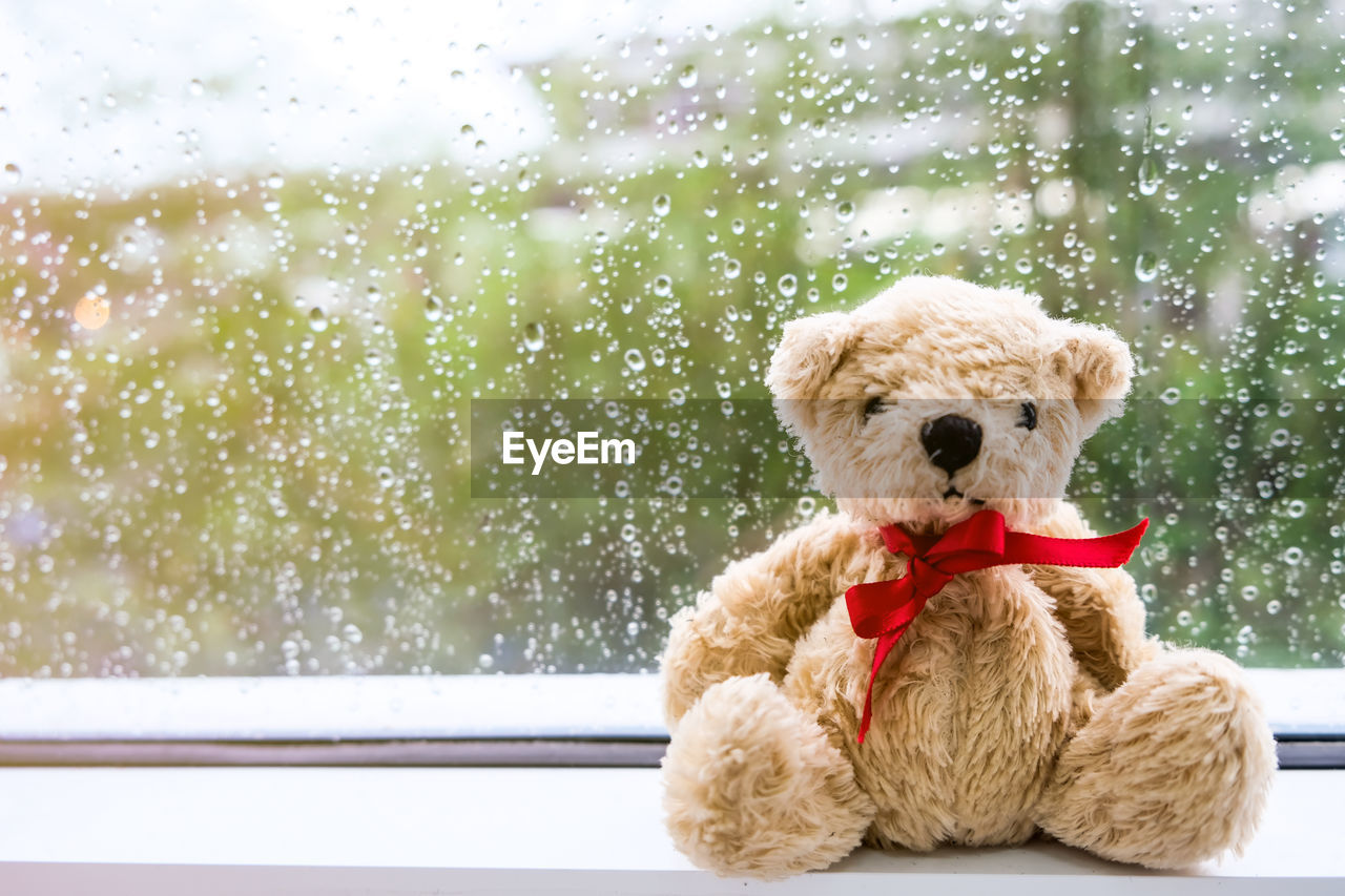 teddy bear, window, toy, animal themes, animal, stuffed toy, mammal, no people, one animal, glass - material, day, canine, indoors, focus on foreground, dog, pets, wet, snow, winter, rain, snowing