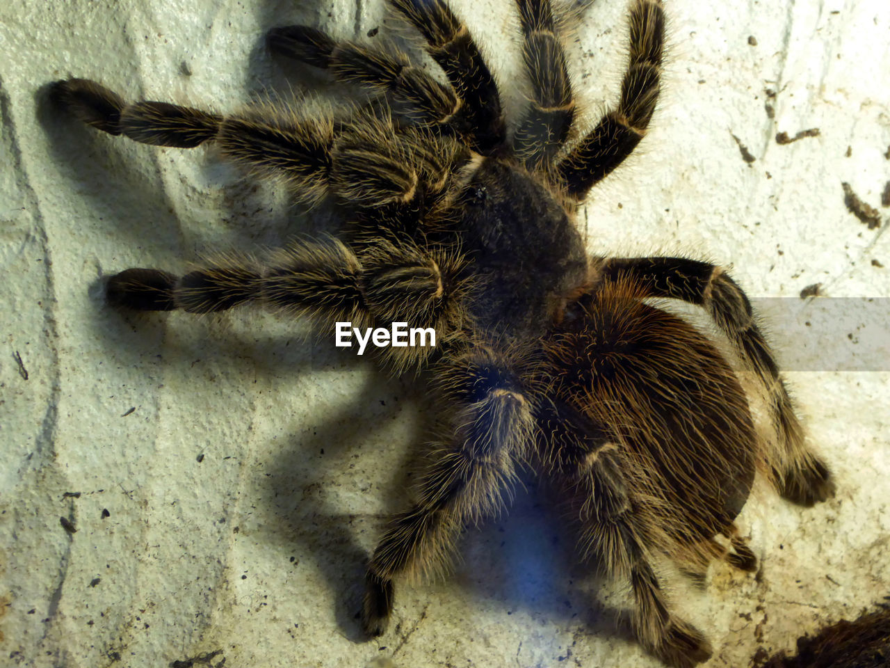one animal, animal themes, insect, spider, animals in the wild, close-up, day, animal wildlife, outdoors, no people, nature