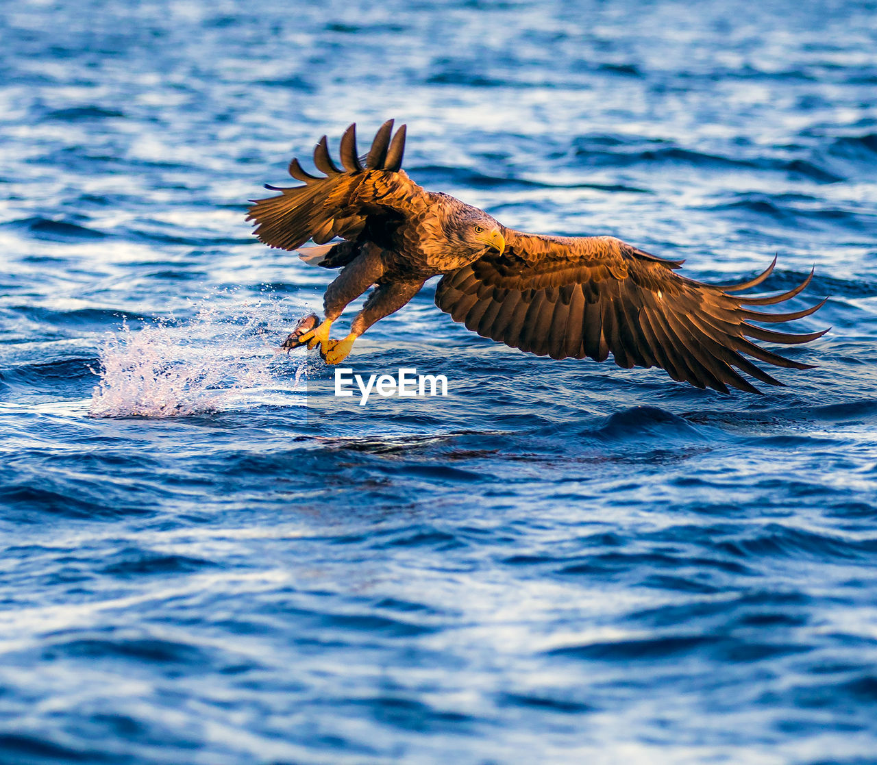water, animal, animal themes, one animal, waterfront, sea, animal wildlife, vertebrate, animals in the wild, day, nature, flying, no people, bird, outdoors, motion, spread wings, fish, beauty in nature, marine