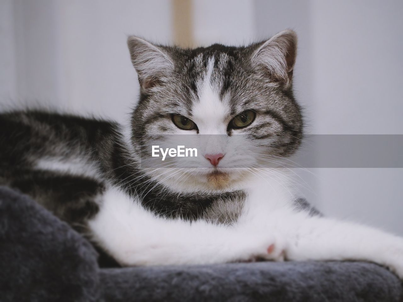pets, domestic, cat, feline, mammal, domestic cat, domestic animals, one animal, vertebrate, no people, relaxation, portrait, whisker, close-up, looking at camera, indoors, focus on foreground, animal eye, tabby, yellow eyes