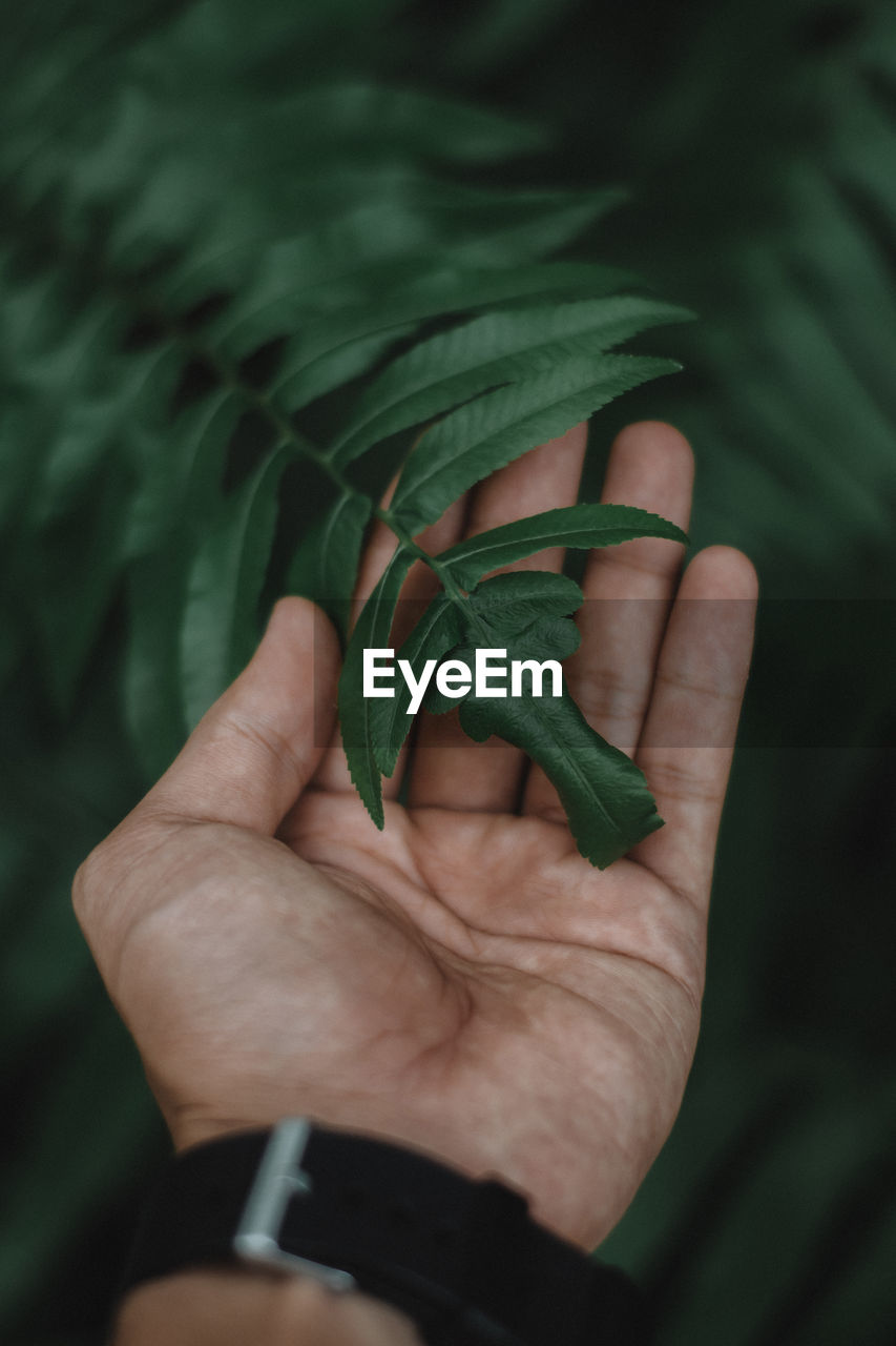 Cropped hand touching plant