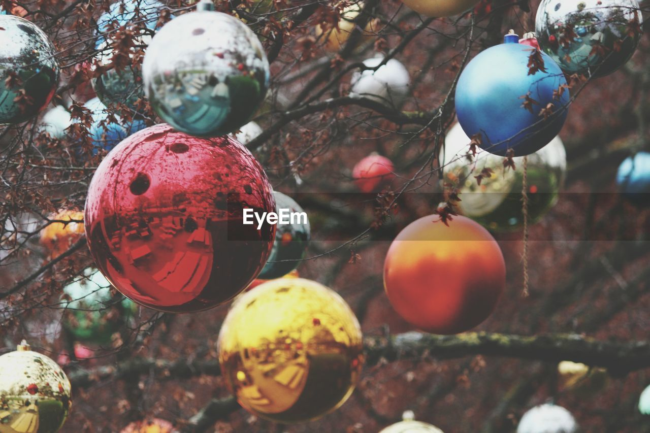 Close-up of baubles hanging on tree
