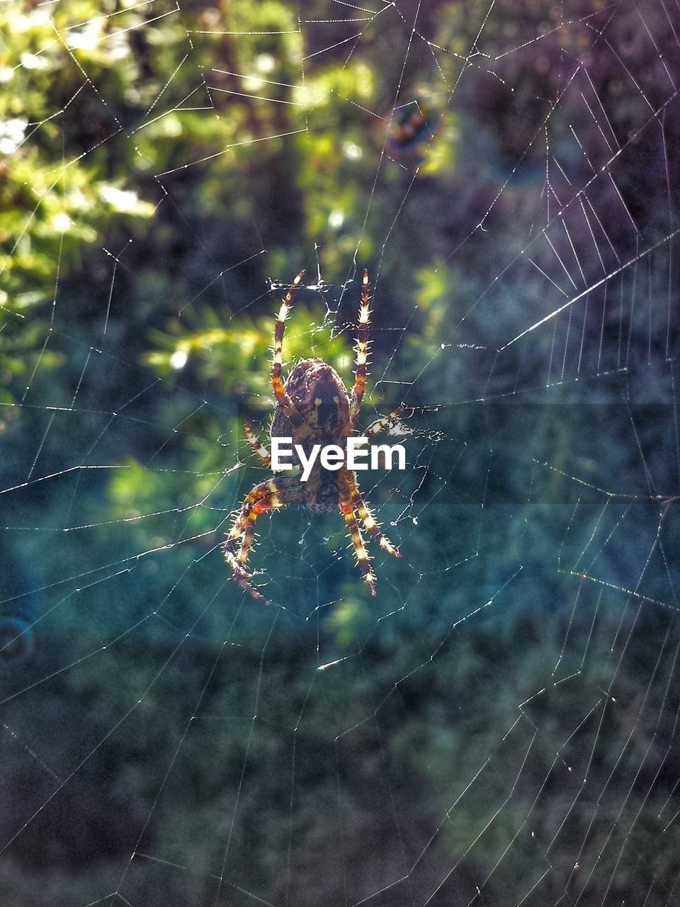spider web, spider, web, survival, one animal, animals in the wild, animal themes, spinning, focus on foreground, close-up, insect, nature, weaving, outdoors, day, animal leg, no people, fragility, animal wildlife