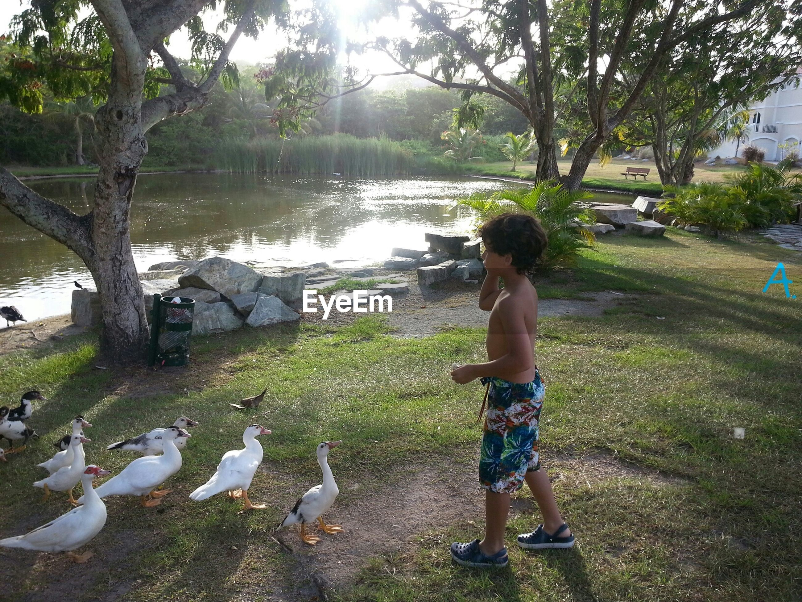 water, tree, bird, animal themes, leisure activity, lifestyles, lake, grass, full length, rear view, nature, animals in the wild, wildlife, day, casual clothing, swan, outdoors, men