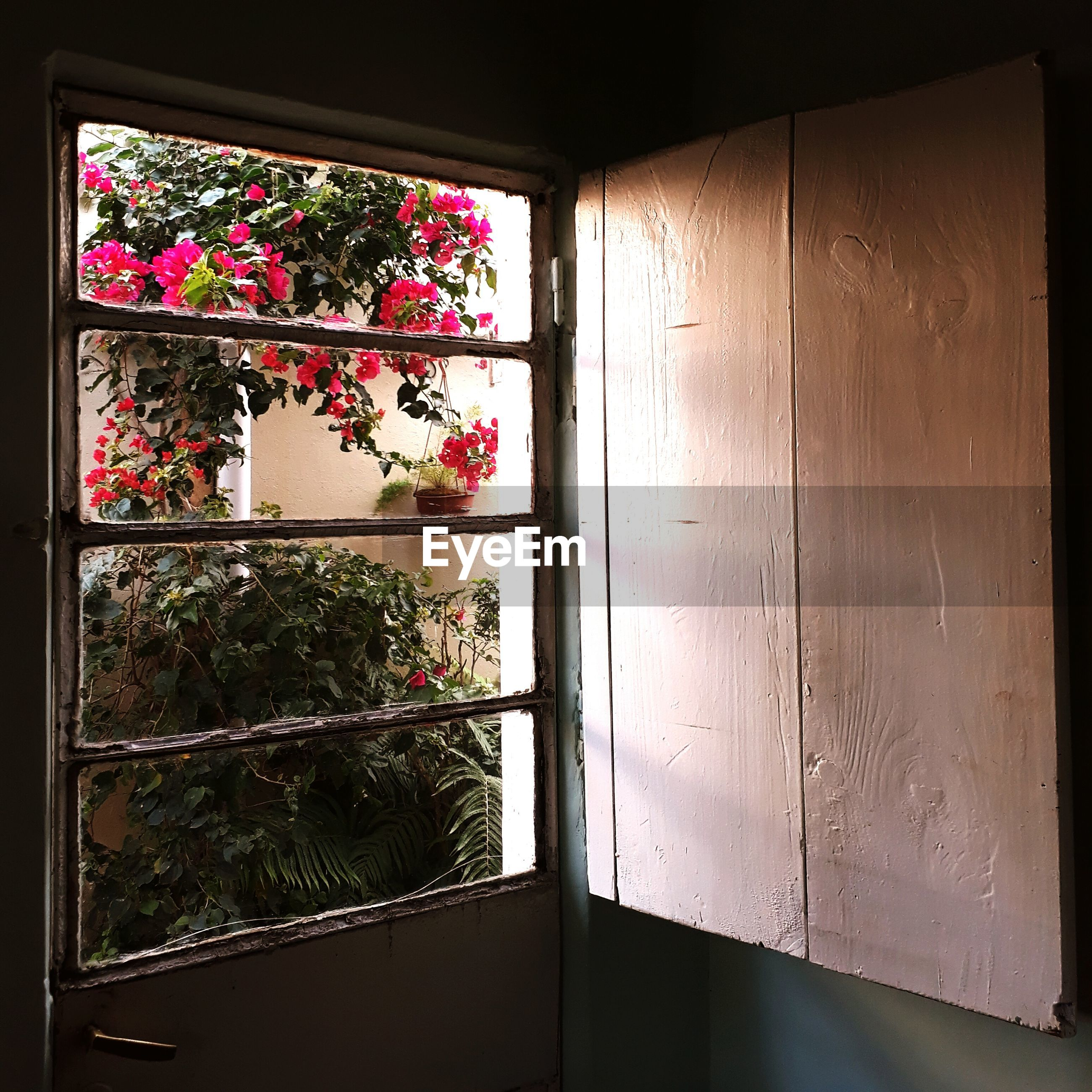 window, potted plant, plant, no people, indoors, door, growth, architecture, day, flower, open door, nature, close-up