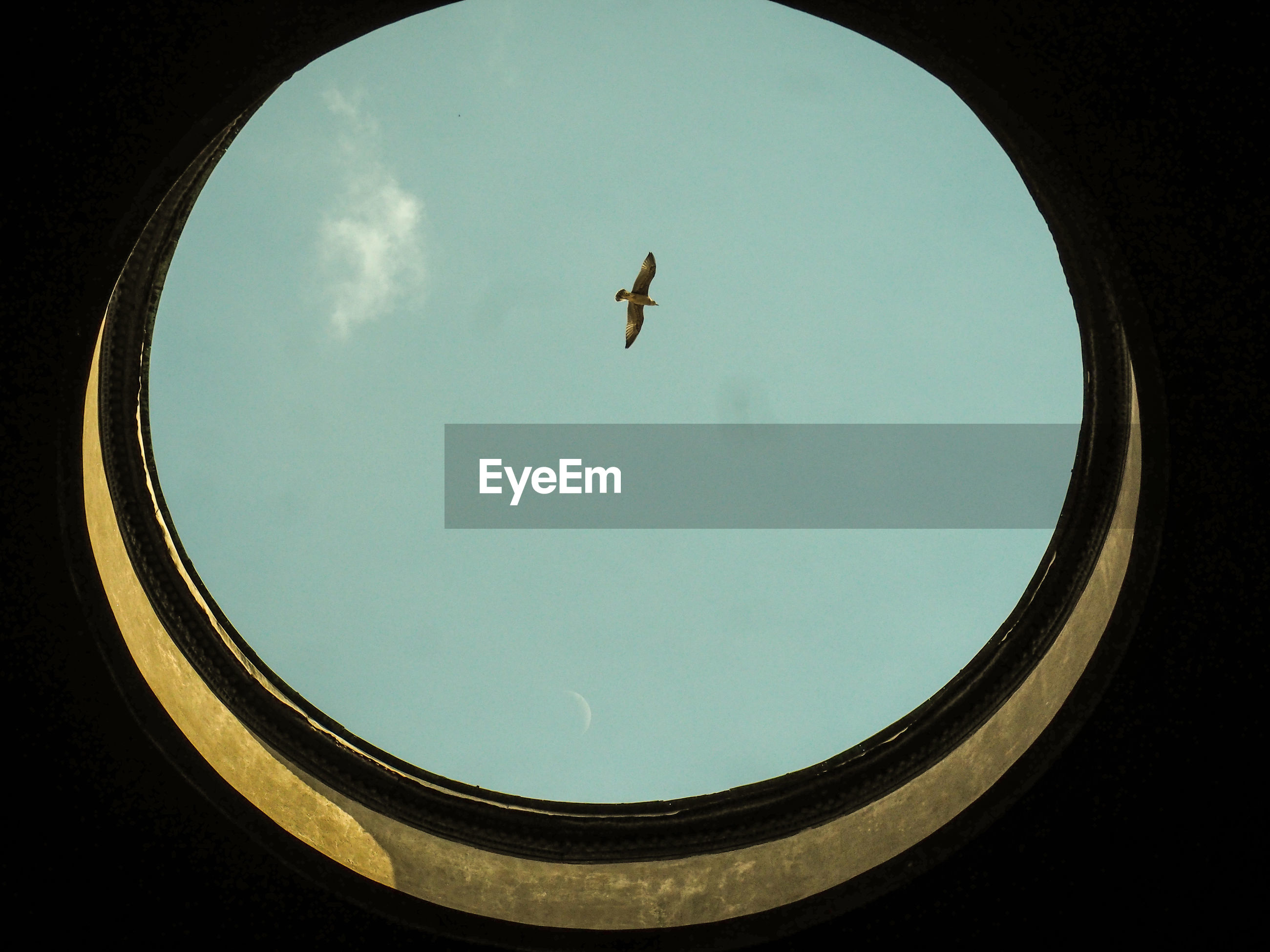 Low angle view of bird flying in blue sky seen through skylight