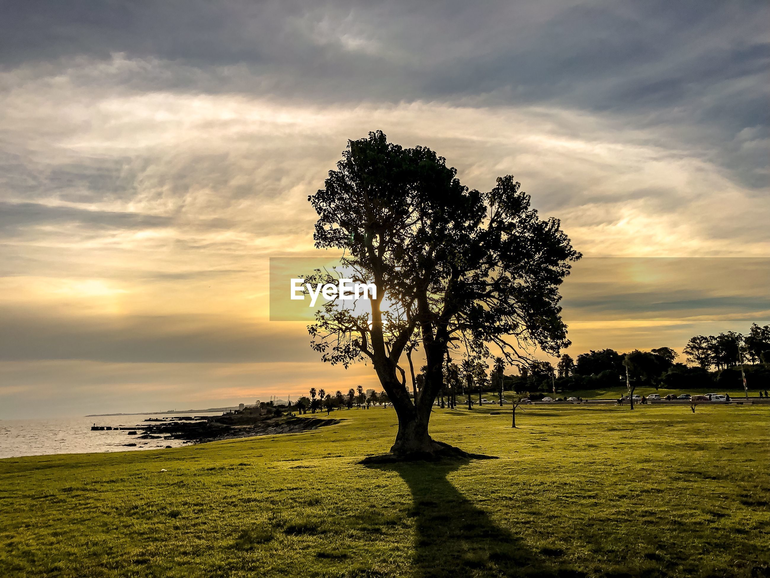 TREE ON FIELD DURING SUNSET