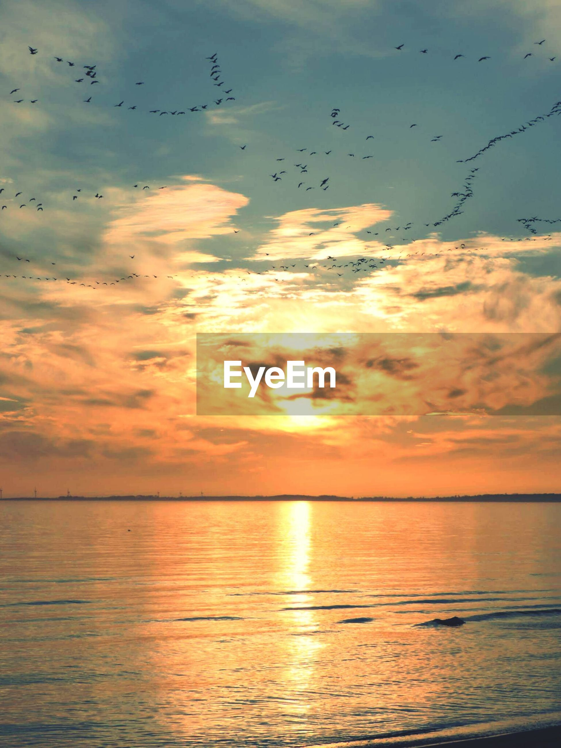 sunset, bird, water, horizon over water, sea, sky, animal themes, flying, scenics, tranquil scene, beauty in nature, tranquility, animals in the wild, wildlife, orange color, idyllic, cloud - sky, silhouette, nature, reflection