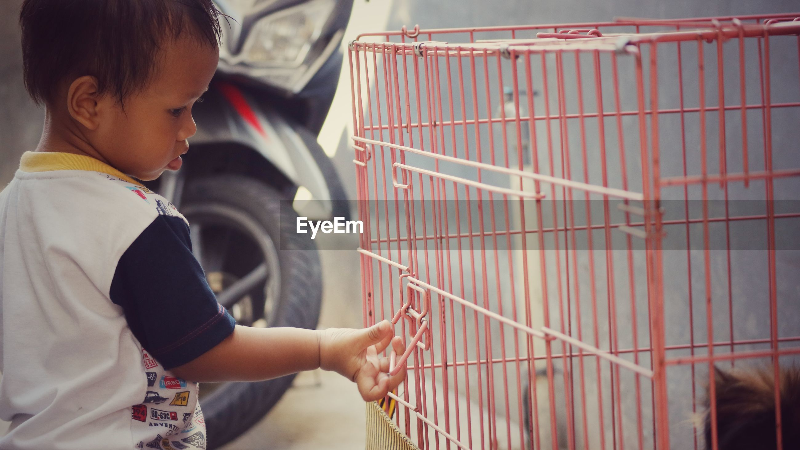 Side view of baby boy touching birdcage