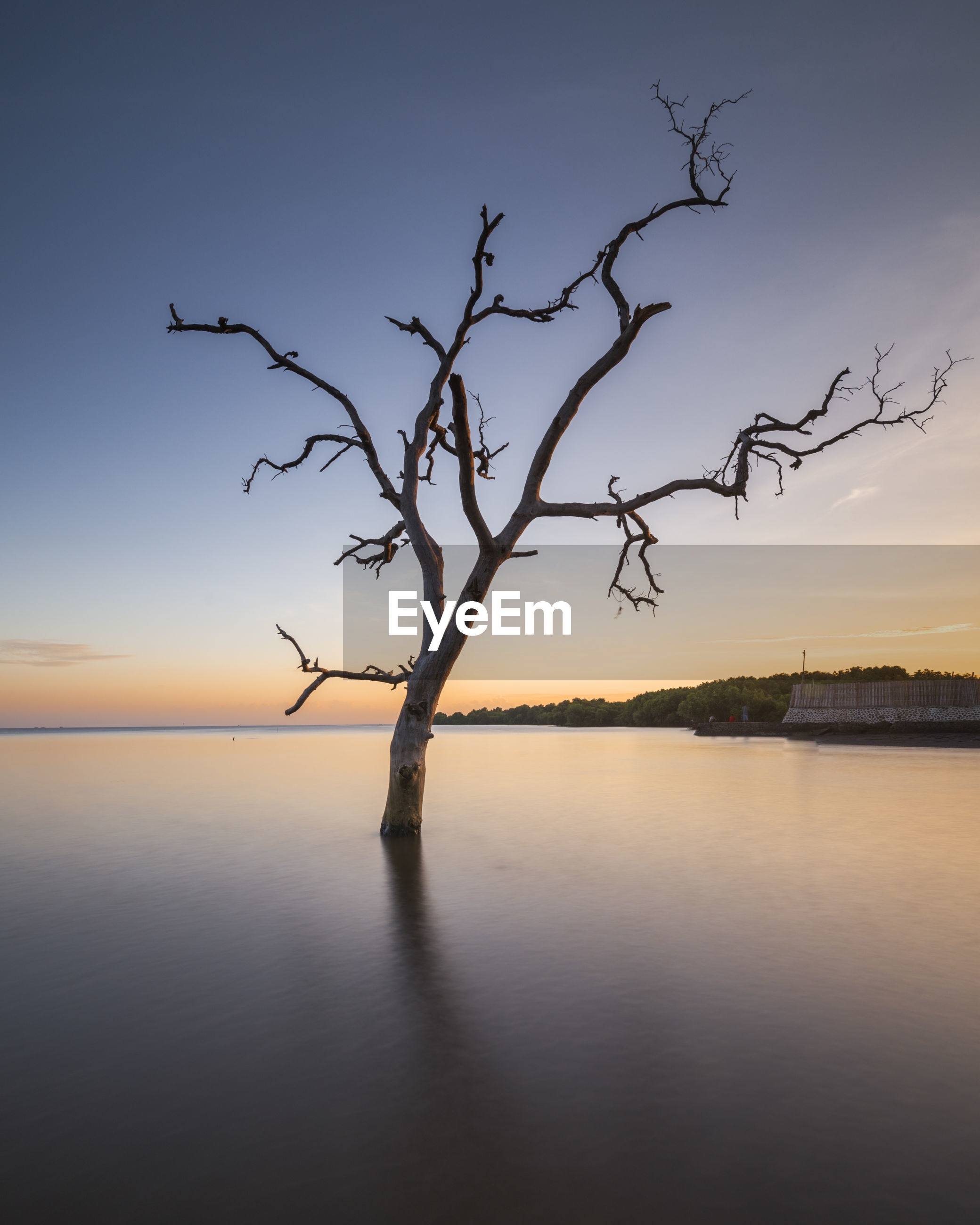 BARE TREE AGAINST SEA AT SUNSET