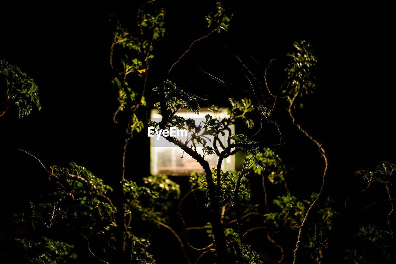 growth, no people, plant, nature, night, outdoors, tree, branch, beauty in nature, close-up, freshness