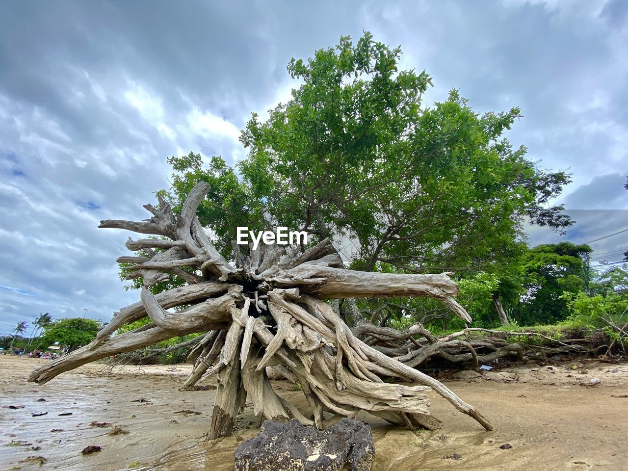 Low angle view of driftwood on tree against sky