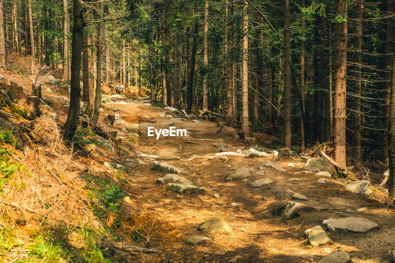forest, tree, land, plant, tranquility, nature, no people, growth, woodland, beauty in nature, day, non-urban scene, tranquil scene, tree trunk, trunk, footpath, outdoors, scenics - nature, environment, direction, trail