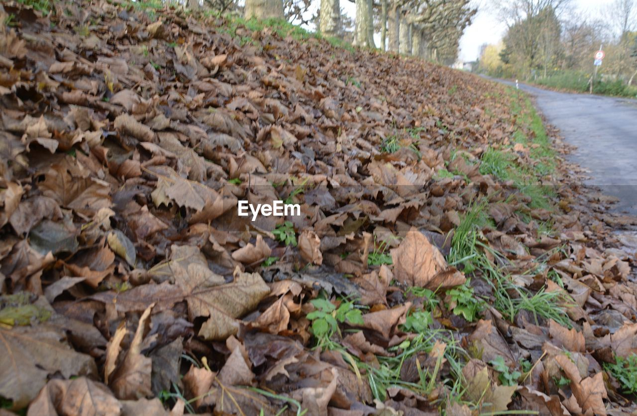nature, leaf, day, outdoors, no people, autumn, plant, tree, forest, close-up