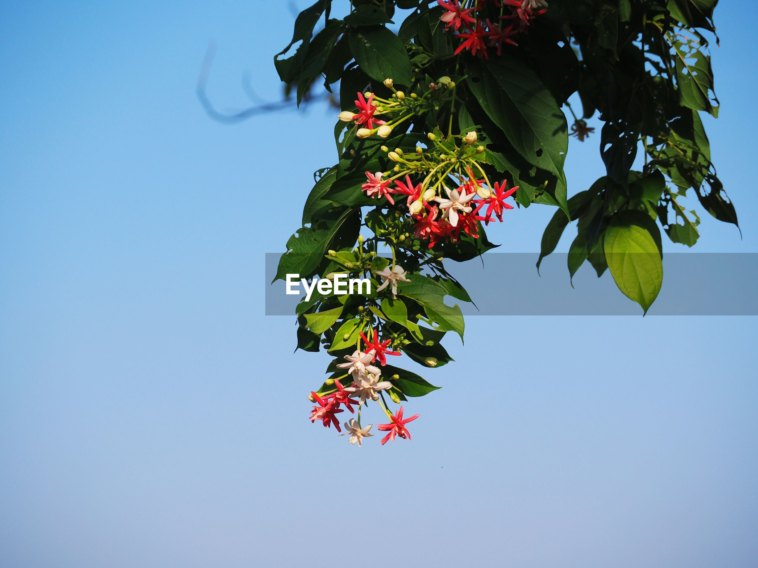 LOW ANGLE VIEW OF RED FLOWERING PLANT AGAINST BLUE SKY