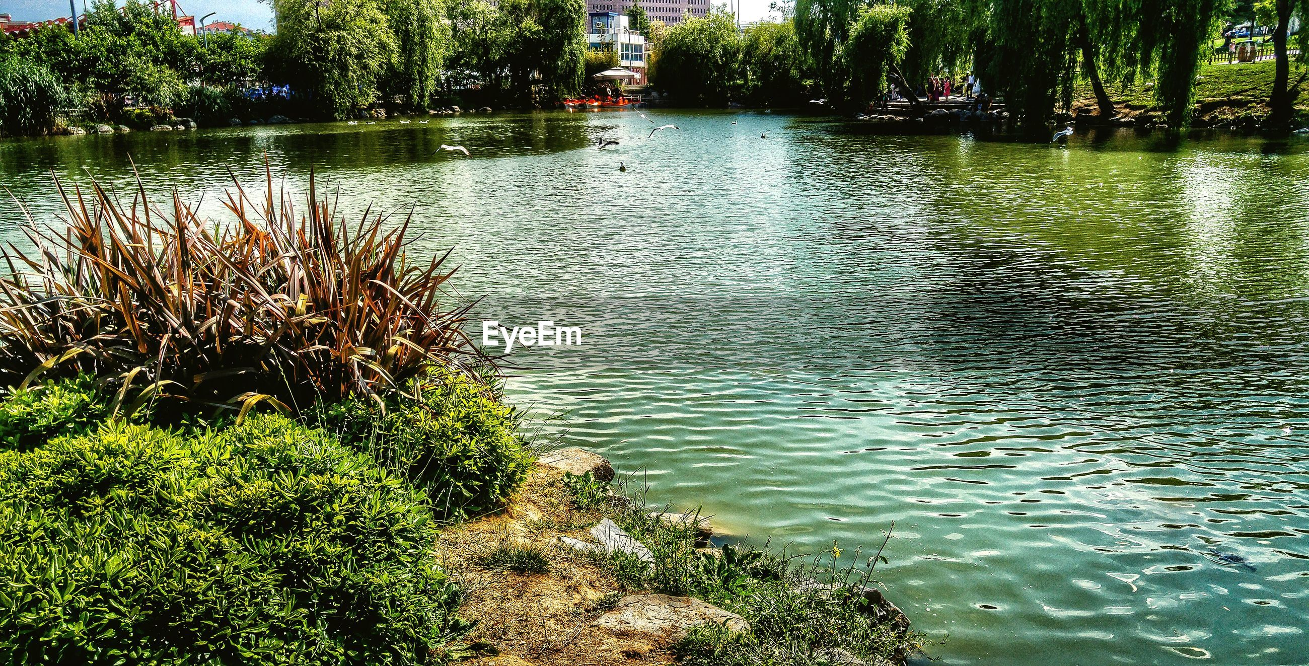 water, tranquil scene, tranquility, lake, scenics, reflection, rippled, nature, beauty in nature, plant, growth, idyllic, non-urban scene, majestic, calm, tourism, waterfront, day, outdoors, vacations, water surface, green color, no people, remote